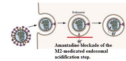 augmentin 625mg thuốc biệt dược