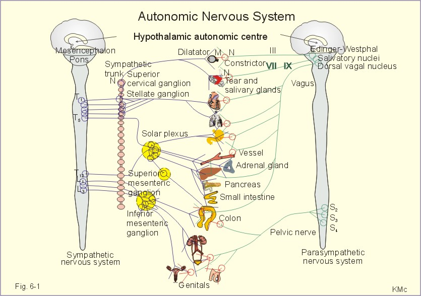Autonomic Pharmacology: Introduction
