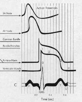 Cardiac Rhythm Disorders