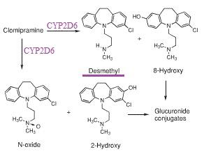 Fluoxetine metabolism